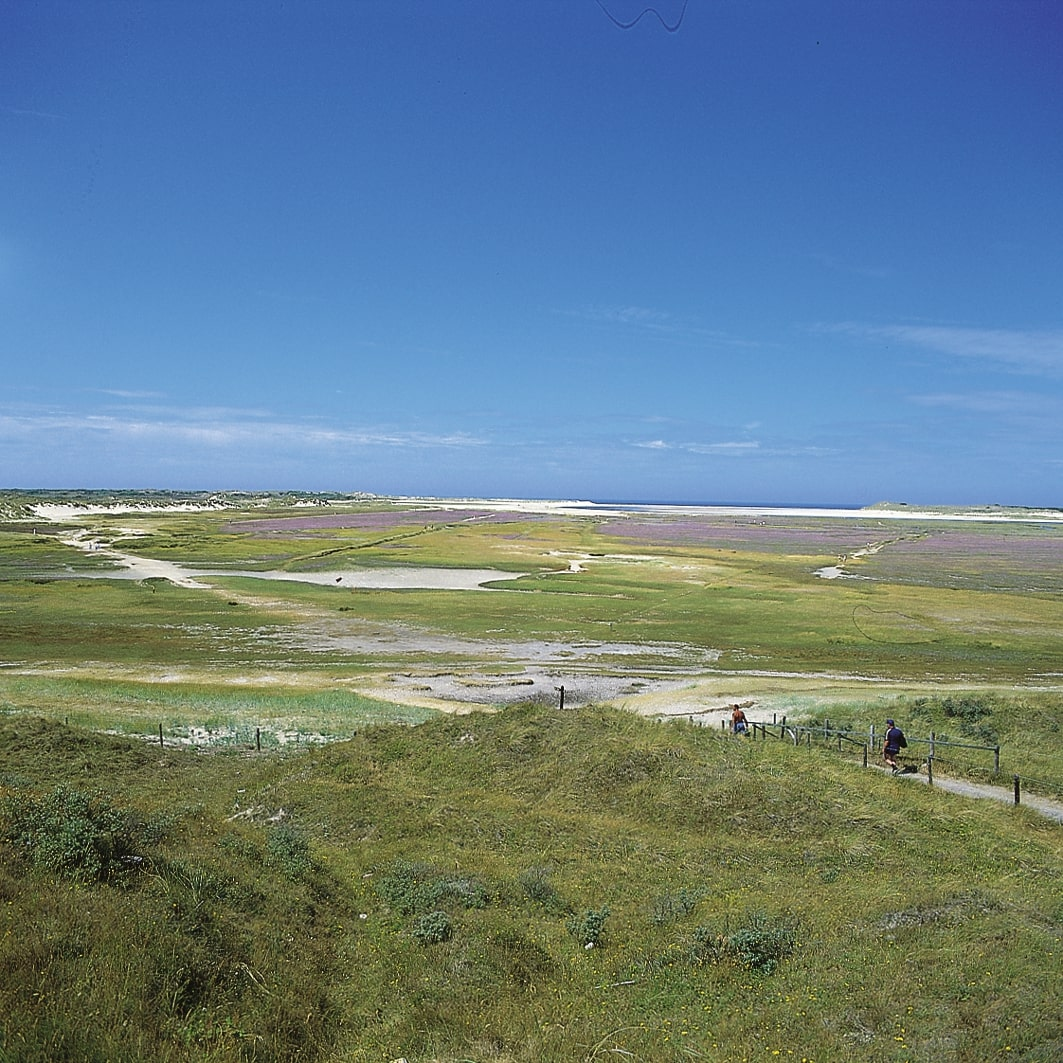 Dunes Of Texel, one of the Frisian Islands
